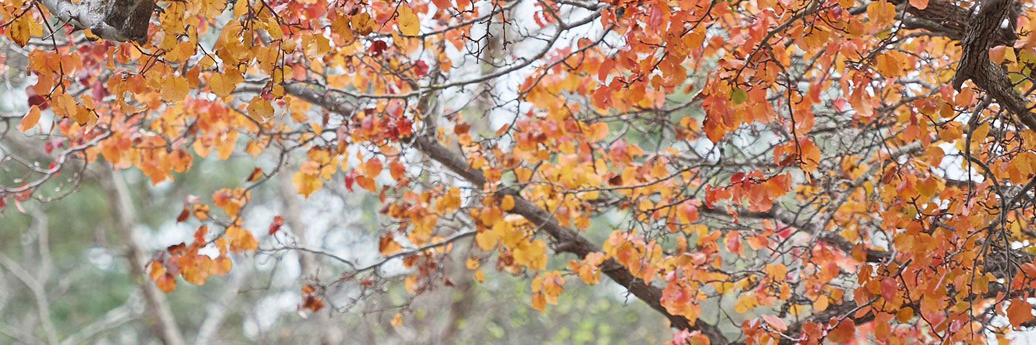 fall color header